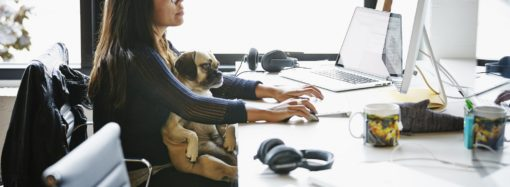 "¿Se vienen las oficinas ""pet friendly""?"